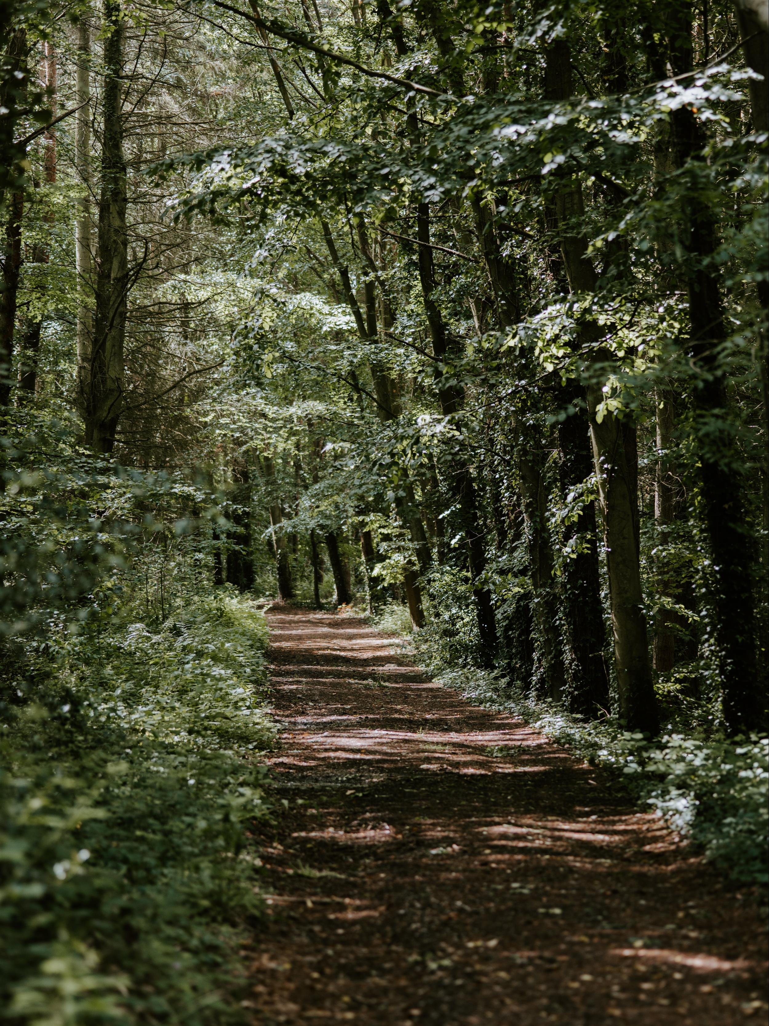 Kal Haven Trail State Park